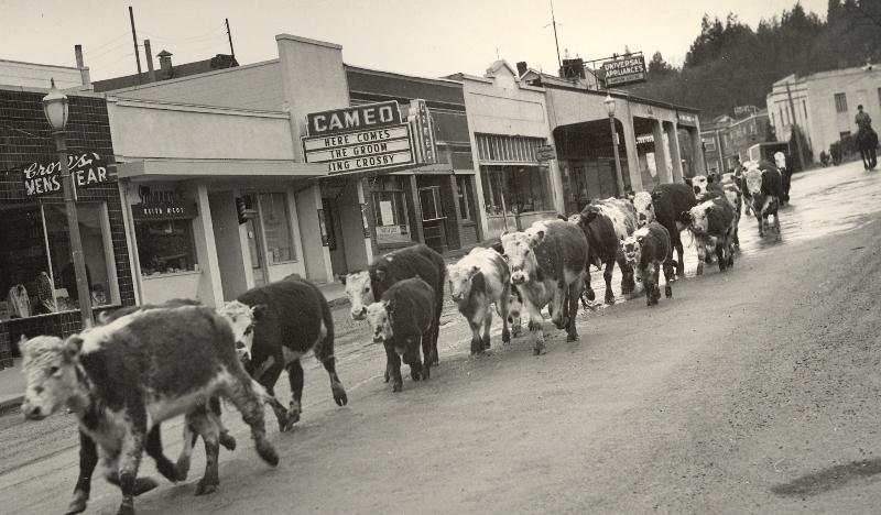 1949 Kreps Cattle Drive through White Salmon